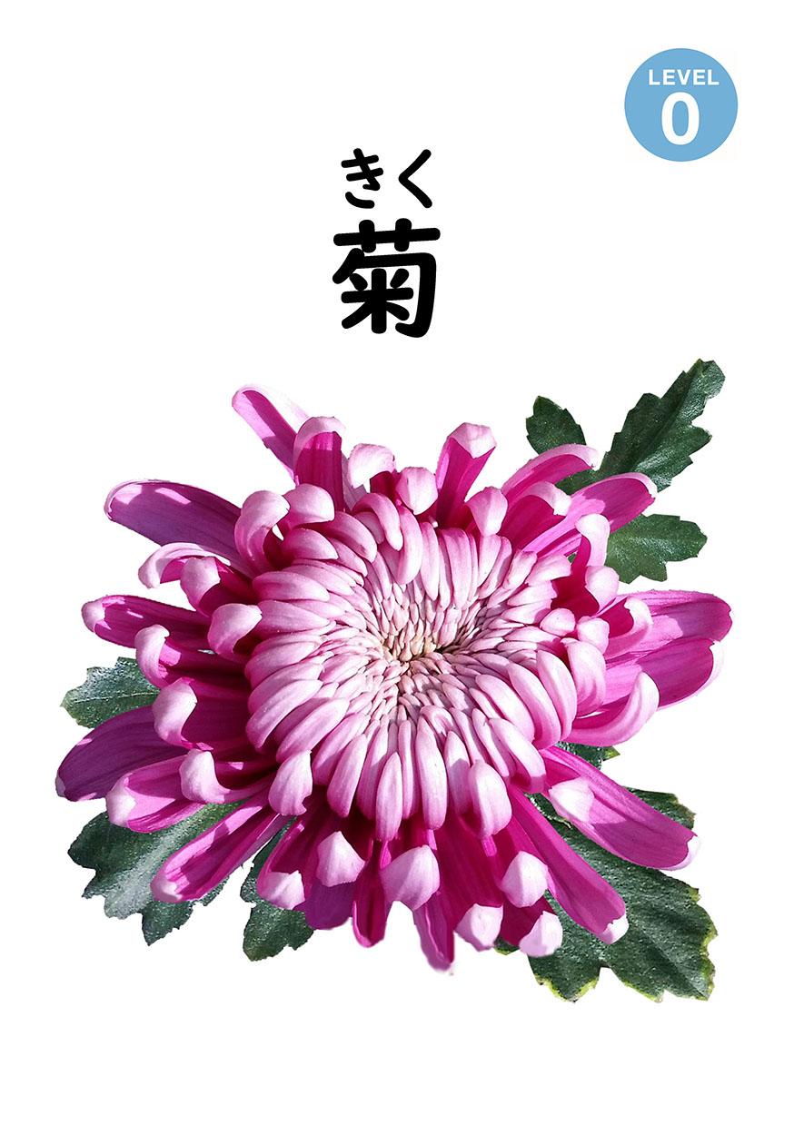 <ruby>菊<rt>きく</rt></ruby>