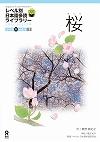 ①桜(さくら)